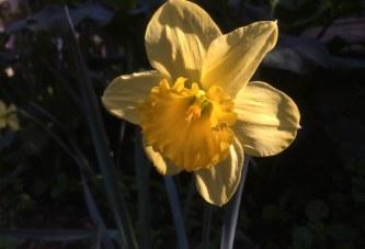 אביב מתחיל